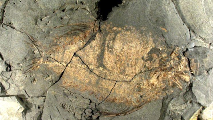 immagine punto di interesse Museo Geopaleontologico di Cava Bomba