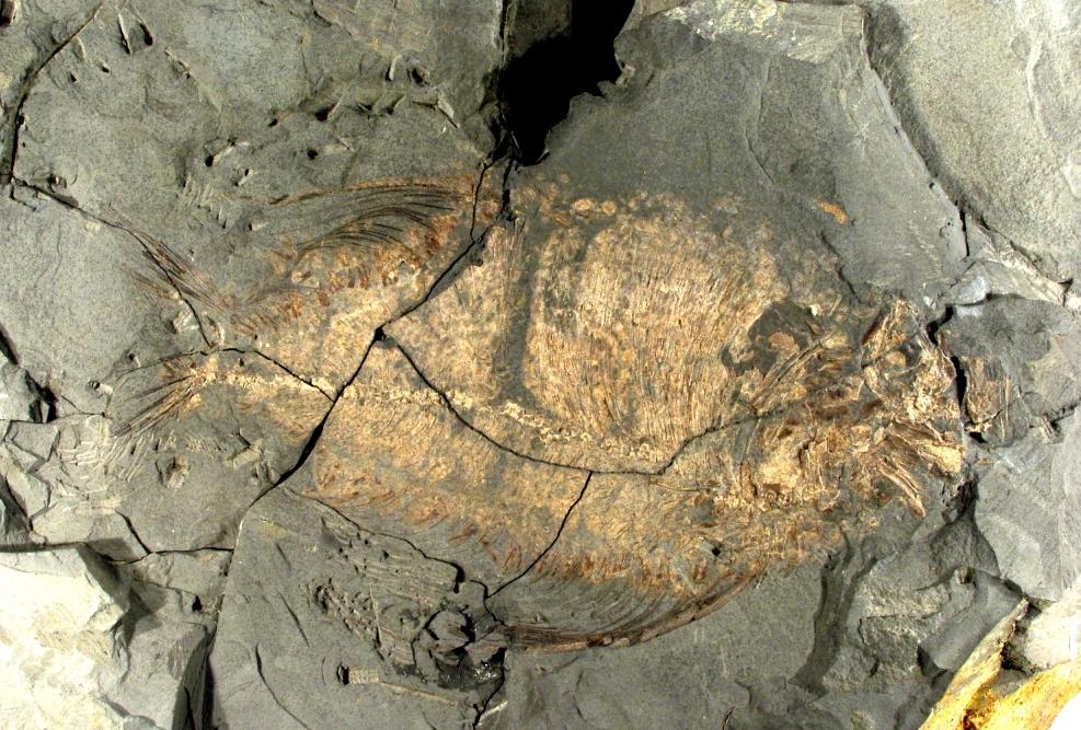 fossile-cava-bomba