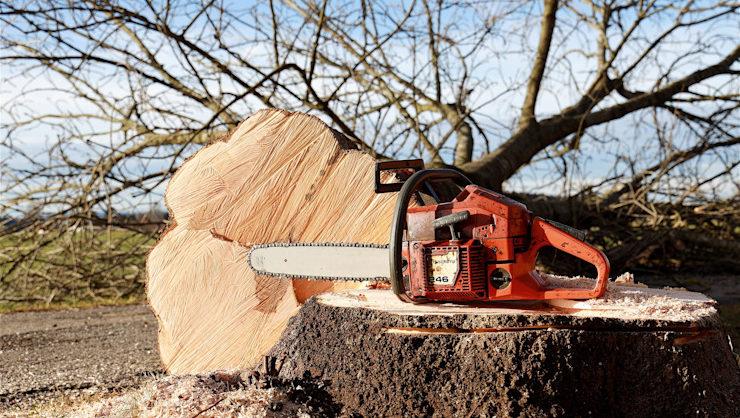 Foto di taglio alberi con motosega
